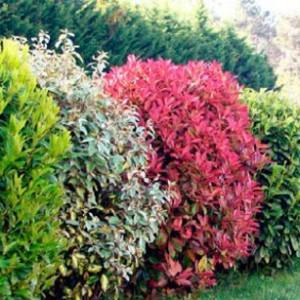 paysagiste arbuste amenagement jardin